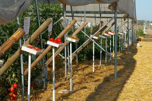 Sakata Woodland Trials